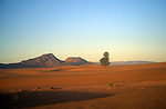 Desert scenery with sand dunes and palm trees, Sahara desert, Zagora, Morocco