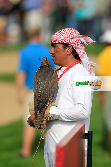 Falcon with handler at the 18th green during Sunday's Round 3 of the Abu Dhabi HSBC Golf Championship 2014 at the Abu Dhabi Gold Club, Abu Dhabi, United Arab Emirates.19th January 2014.<br /> Picture: Eoin Clarke www.golffile.ie