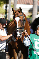 Dullahan in the paddock for the Pacific Classic at Del Mar Race Course in Del Mar, California on August 26, 2012.