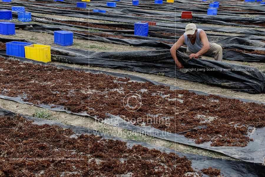 TURKEY Manisa, cultivation of organic grapes for production of raisin and sultana, sun dried grapes at farm / TUERKEI, Anbau von Weintrauben fuer Verarbeitung zu Bio Trockenobst Rosinen und Sultaninen fuer die Firma Rapunzel, Sonnen getrocknete Trauben auf dem Feld, Farmer Hüseyin Irtem