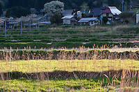 Overgrown fields in the abandoned village of Tsushima in Fukushima, Japan. Friday May 4th 2012. After the explosions at the daichi nuclear plant caused by the March 11th 2011 earthquake and tsunami, high levels of radiactive contamination in this village has made it uninhabitable.