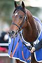 Horse Racing: 61st Arima Kinen (The Grand Prix) at Nakayama Racecourse