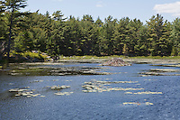 A beaver house is pictured in Acadia National Park on Mount Desert Island in Maine Wednesday June 19, 2013. Created as Lafayette National Park in 1919 and renamed Acadia in 1929, the park includes mountains, an ocean shoreline, woodlands, and lakes.