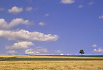 Field and tree in Aroostook County, Maine, USA