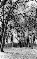 Fall snowfall Canatara Park.  1981 Times Herald Award for Photographic Excellence. Eastern Michigan Art Exhibition. Port Huron Michigan.
