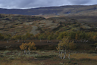 Autumn Forollhogna national park,Norway Landscape, landskap,