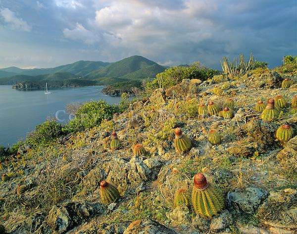 Turks cap cactus at Ram Head, Virgin Islands National Park, St. John, US Virgin Islands, AGPix_029.