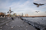 Baku Ocean Walkway With Black-headed Gulls