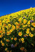 San Luis Obispo County