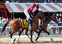 C Z Rocket in the post parade as Whitmore (no. 3) wins the Forego Stakes (Grade 1), Aug. 25, 2018 at the Saratoga Race Course, Saratoga Springs, NY.  Ridden by  Ricardo Santana, Jr., and trained by Ron Moquett, Whitmore finished 1 1/2 lengths in front of City of Light (No. 8).  (Bruce Dudek/Eclipse Sportswire)