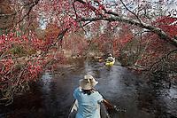 Debbie Canoeing on Cedar Creek; Red Maple; Acer rubrum;  NJ, Pine Barrens, Cedar Creek; kayak; canoe;