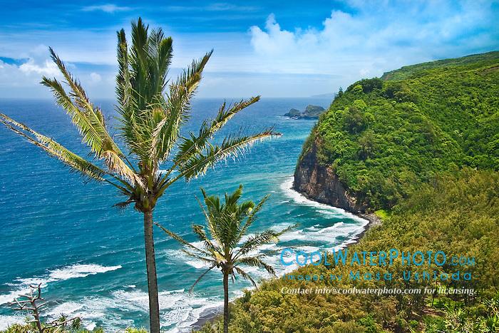 coconut palm trees, Cocos nucifera,  and Pololu Beach, Pololu Valley, North Kohala, Big Island, Hawaii, Pacific Ocean