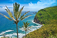 coconut palm trees, Cocos nucifera,  and Pololu Beach, Pololu Valley, North Kohala, Big Island, Hawaii, Pacific Ocean