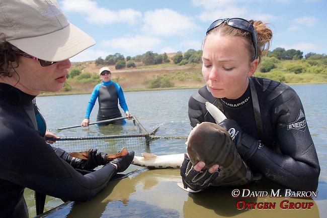 Katie Kent Working Up Leopard Shark - Jemima