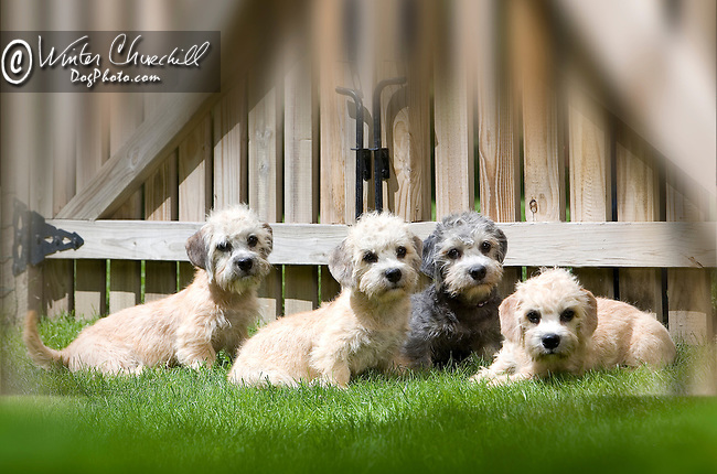 Dandie Dinmont Terrier Shopping cart has 3 Tabs:<br />