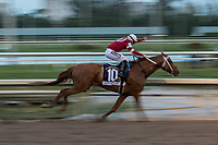 HALLANDALE BEACH, FL  JANUARY 27: #10 Gun Runner ridden by Florent Geroux in the stretch of the Pegasus World Cup Invitational, at Gulfstream Park Race Track on January 27, 2018, p in Hallandale Beach, Florida. (Photo by Casey Phillips/ Eclipse Sortswire/ Getty Images)