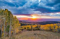 Aspen at sunset, La Sal Mountains, Utah Manti-La Sal National Forest   Quaking aspen,  Populus tremuloides