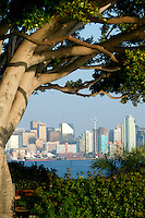 View of downtown from Harbor Island, San Diego, California