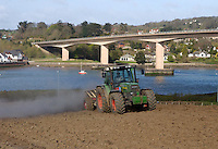 Clovelly Contractors applying lime at the rate of 2 tonnes per acre on land ready for maize. The field will make up a total of 325 acres of maize grown by Willis Farming Ltd., of Higher Alminstone Farm, Woolslery, near Bideford, Devon for feeding to their 1400 Holstein milkers.