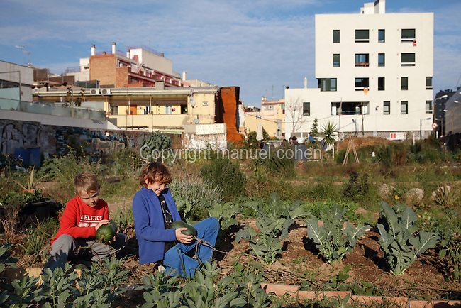 Children picking squashes in El Hort Indignat, an urban allotment project in the El Poblenou district of Barcelona, Catalonia, Spain. The industrial neighbourhood fell into decline after the Industrial Revolution, and has recently been redeveloped, triggered by the Olympic Games of 1992, with old factories converted into apartment buildings and offices, resulting in a vibrant, young and artistic community. Picture by Manuel Cohen