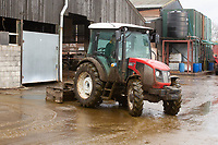 Compact tractor scraping slurry  on a dairy farm<br /> &copy;Tim Scrivener Photographer 07850 303986<br />      ....Covering Agriculture In The UK....