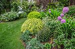 Vashon-Maury Island, WA: Summer perennial garden featuring hakonechloa macra 'aureola', allium; erengium; peonies, irises and hostas