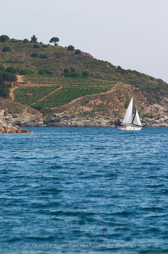 Vineyard by the sea. Sailing boat. Banyuls sur Mer, Roussillon, France