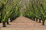 moss on hazelnut trees in oregon state