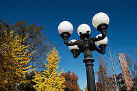 Lamp post near Chapel with fall gingko leaves.<br />  (photo by Megan Bean / &copy; Mississippi State University)