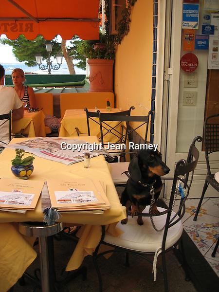 Doggone Italian Service