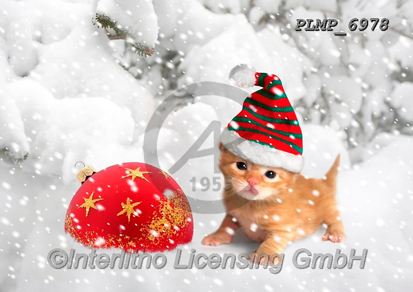 Marek, CHRISTMAS ANIMALS, WEIHNACHTEN TIERE, NAVIDAD ANIMALES, photos+++++,PLMP6978,#xa# ,kittens,cats