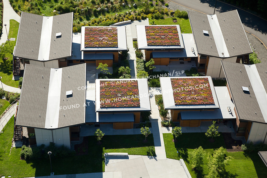 Green roofs at Bastyr University student housing project, Kenmore, WA; July, 2013