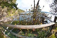 Protectd Garry Oak (Quercus garryana), Jones Island State Park, San Juan Islands, Washington, US