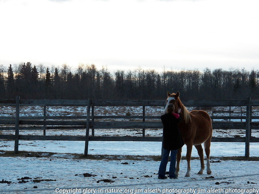 These horse photos were taken of Kari and Coke (subjects unaware) at dusk, in north-central Alberta.