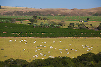 Araxa_MG, Brasil...Criacao de gado e agricultura em Araxa...The cattle ranching and agriculture in Araxa...Foto: LEO DRUMOND / NITRO