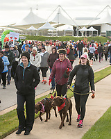NWA Democrat-Gazette/BEN GOFF @NWABENGOFF<br /> Participants start the walk Saturday, April 14, 2018, during the American Heart Association's annual Northwest Arkansas Heart Walk at the Walmart AMP in Rogers.