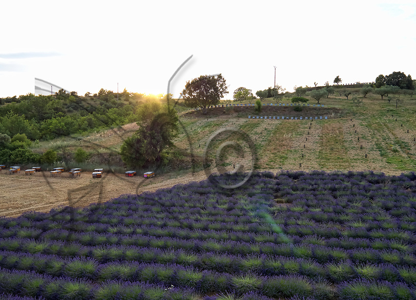 Aerial view of three apiaries in the lavender fields near Valensole. The production of lavender honey is estimated to be 1000 tons a year.<br /> Vue a&eacute;rienne de trois ruchers dans les champs de lavandins pr&egrave;s de Valensole. La production en miel de lavande s&rsquo;estime autour 1000 tonnes par an.