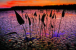 Lilly pads cover English Lake in northern Wisconsin at sunset.