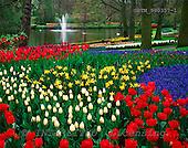 Tom Mackie, FLOWERS, photos, Keukenhof Gardens, Lisse, Holland, GBTM990357-1,#F# Garten, jardín