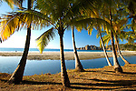 Beautiful Palm Trees Line The Beach At Playa Carrillo On Costa Rica's Nicoya Peninsula On The Pacific Ocean.