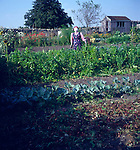 Scarecrow in cottage allotment garden, Marshfield, Wiltshire, England