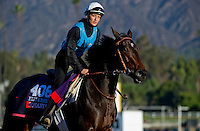Romantica, trained by Andre Fabre, trains for the Breeders' Cup Filly & Mare Turf at Santa Anita Park in Arcadia, California on October 30, 2013.