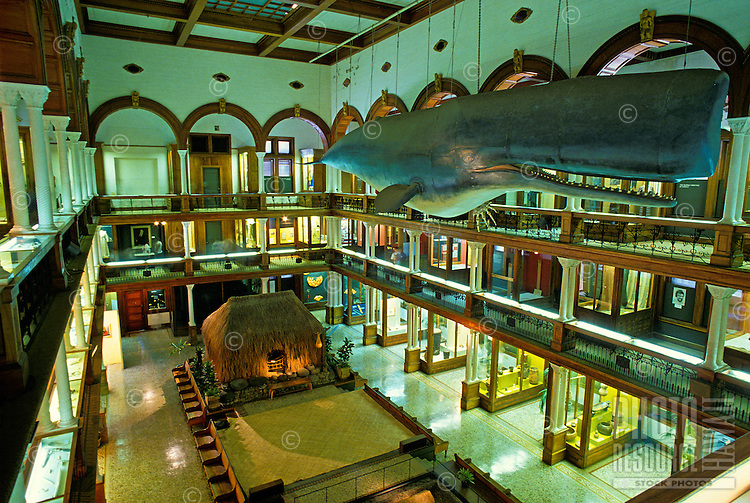 Interior view of multi-level hall, with whale top right and grass hale on the ground level, on display at Bishop Museum, Honolulu