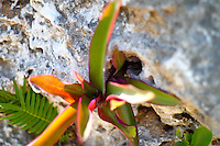 tropical flower growing out of limestone