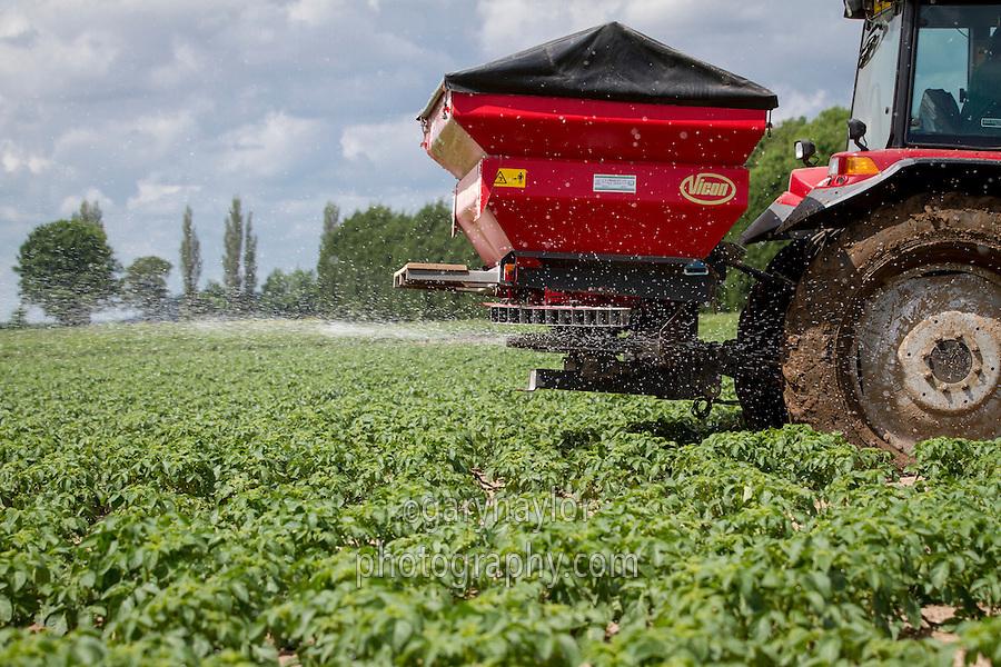 Applying nitrogen and slug pellets to Maris Piper potatoes - June, Lincolnshire