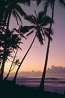 Coconut palms at sunrise<br />