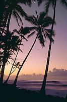 Coconut palms at sunrise<br /> Kaimu Black Sands Beach<br /> Island of Hawaii<br /> Hawaii