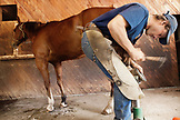 USA, Wyoming, Encampment, a ferrier gives a horse a new set of shoes, Abara Ranch
