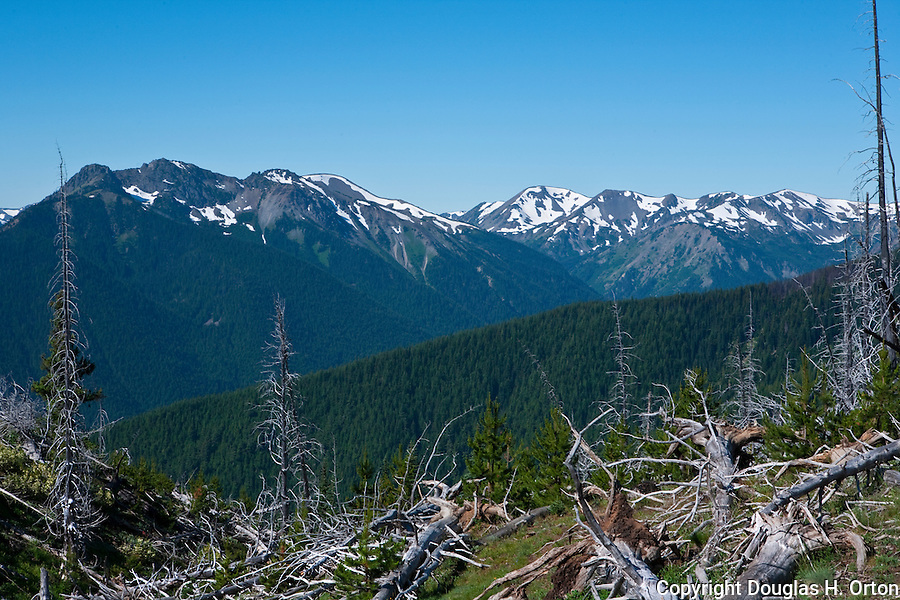 View west from the Deer Park Campgound, on Blue Mountain, shows healing forest fire damage, with Hurricane Ridge and the Bailey Range in the background.  Olympic National Park.  Olympic Penninsula, Washington.  Outdoor Adventure. Olympic Peninsula