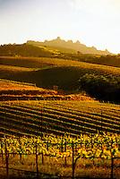 Chalone Vineyards, near Pinnacles National Monument, Monterey County, California